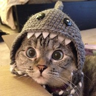 Not My Cat - But I Have Decided it is my Spirit Animal :)